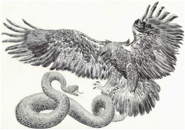 Aigle vs serpent